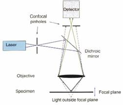 laser scanning microscope system